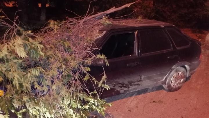 «Ствол прошил лобовое стекло»: в Волгограде рухнувшее дерево покорежило отечественную машину