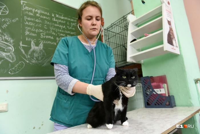 Наталья Черемицына — ветеринарный врач Центра реабилитации животных при Уральском государственном аграрном университете