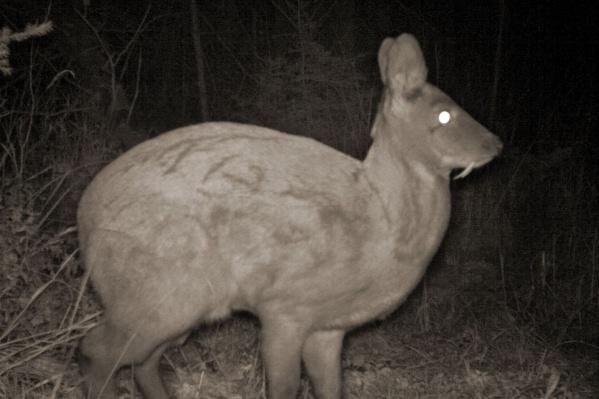 На краснокнижного зверька расставляют ловушки браконьеры, в них попадаются и остальные животные