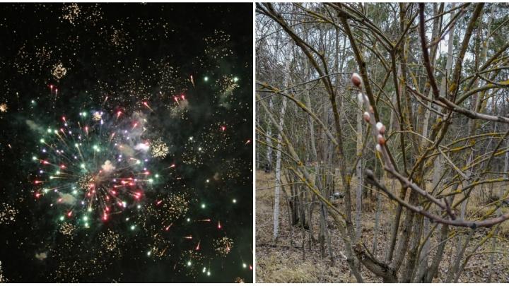 Лучшие фото этой недели: эпичный фейерверк в Нижнем Новгороде и распустившаяся верба