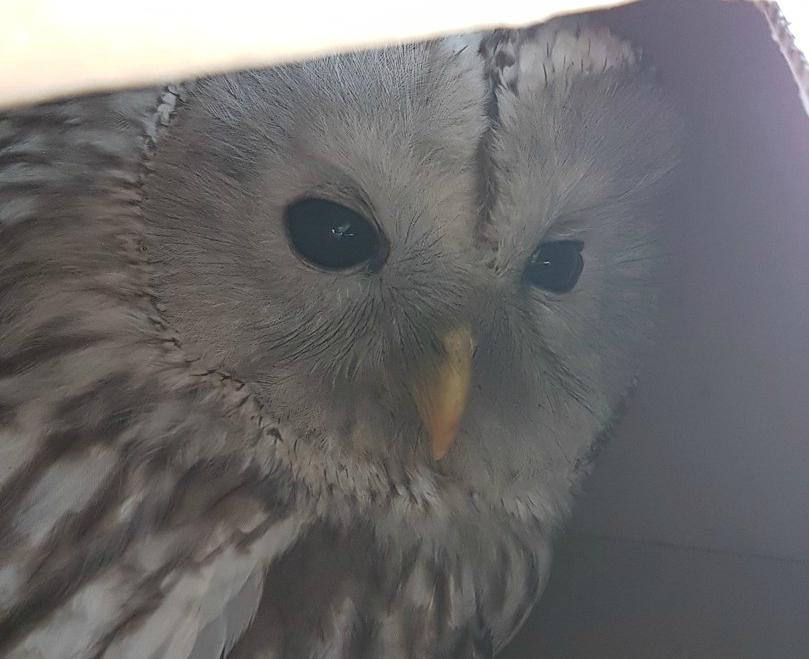 Птицу отбили от стаи ворон