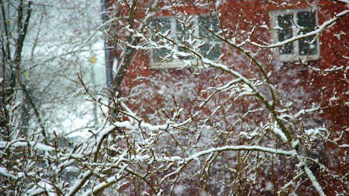 Рабочая неделя в Омске начнётся с небольшого снегопада