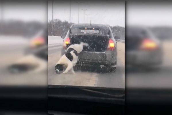 На видео видно, как крышка багажника приоткрывается и собака выпрыгивает наружу