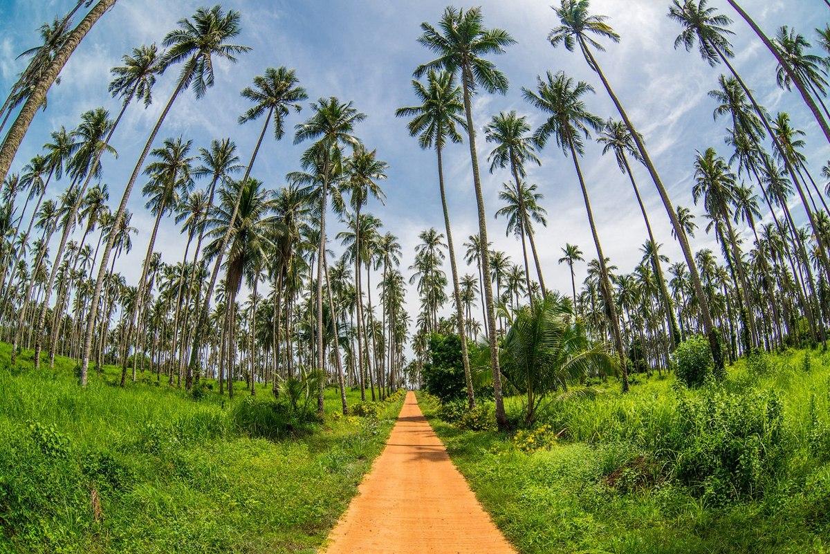 По красоте некоторых курортных мест Таиланд может конкурировать с более фешенебельными странами