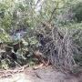 В Волгограде упавшее дерево раздавило KIA Rio