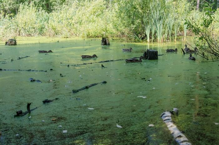 Судя по описанию пограничников, озеро Сладкое выглядит примерно так