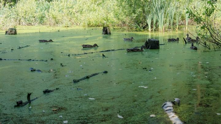 Потянуло на Сладкое: россиян возмутила новость о передаче озера Казахстану
