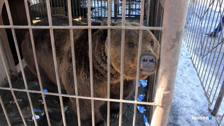 Омичка пожаловалась на содержание медведей в кафе. Сотрудники говорят, что тратят на них по 7000