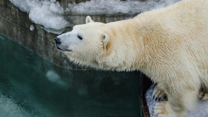 Новосибирский зоопарк поменял график работы
