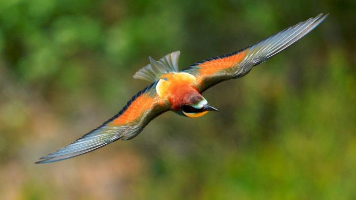 «Он дарит ей насекомых»: волгоградец поймал в объектив летнюю птицу, перекусывающую на лету