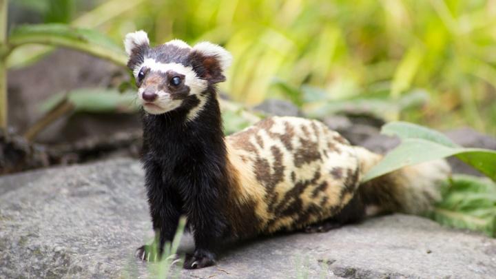 Маленькие перевязки из Новосибирского зоопарка улетели жить в Германию