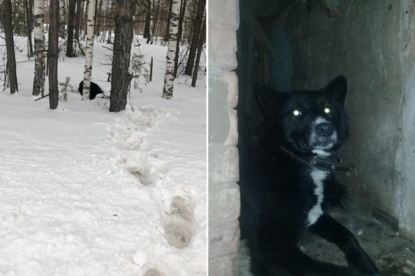 Собаку нашли в сугробе и спасли