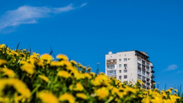 «Теплее и суше, чем в прошлом году»: синоптики рассказали, какой будет погода в Прикамье в июле