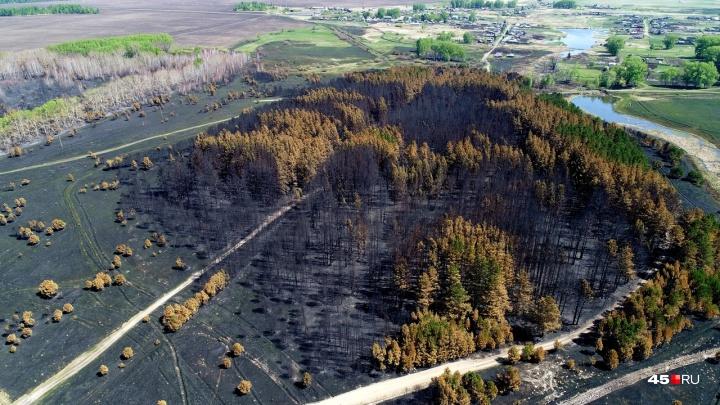 «Надеюсь, это послужит уроком и другим»: курганский аэрофотограф побывал на местах майских пожаров