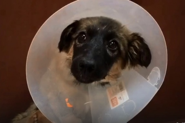Выживет собака или нет — неизвестно