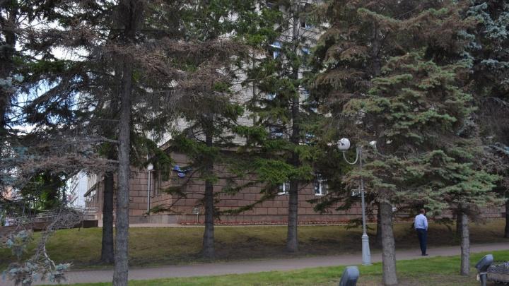 Две голубые ели у здания правительства выпилили. Остальные помыли от грязи