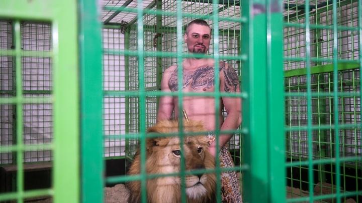 «Все могло быть плачевнее, до летальных исходов»: репортаж из Екатеринбургского цирка, где подрались львы
