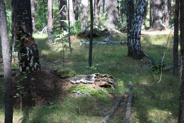 Режим ЧС снят в связи с ликвидацией крупных лесных пожаров