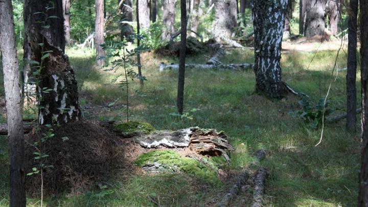 В лесах Курганской области снят режим чрезвычайной ситуации