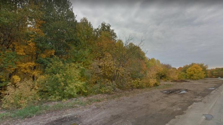 В Самаре ради новой дороги хотят вырубить лес у Волжского шоссе