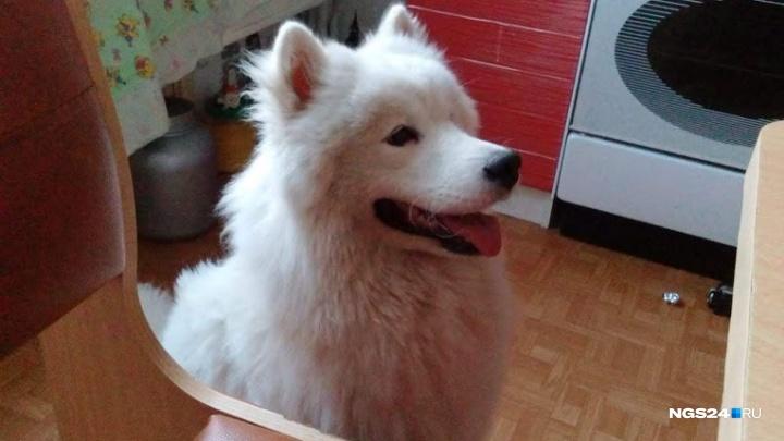 Застрявшей под ванной собаке понадобилась помощь спасателей