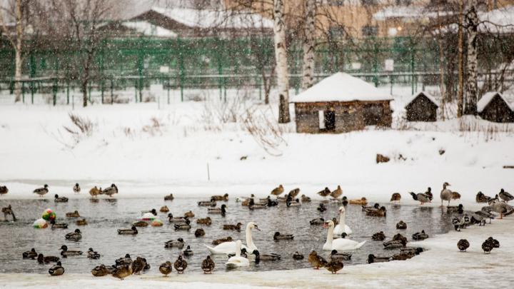 В Россию идёт субтропическое тепло: синоптики заявили о переносе климатической зимы