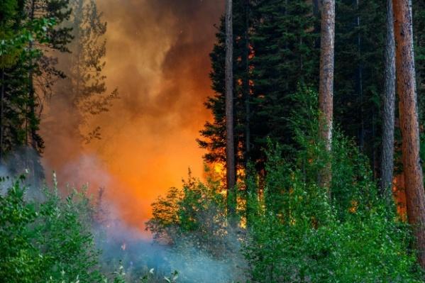 Площадь лесных пожаров снизилась на 300 тысяч га