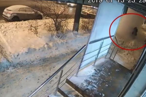 Двух женщин сбило с ног внезапно обрушившимся снегом