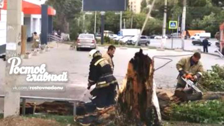 Опасная привычка: в Ростове курильщик сжег дерево