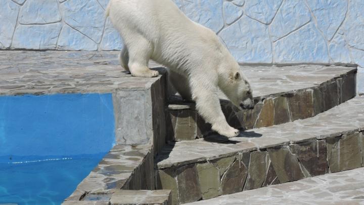 «Это ложь»: директор ростовского зоопарка прокомментировал претензии депутата о содержании животных