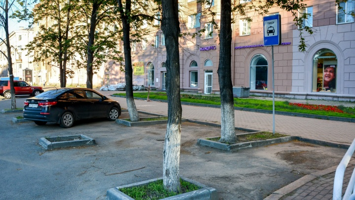 Липовый знак: машину челябинца увезли на штрафстоянку из-за дерева-«нарушителя»