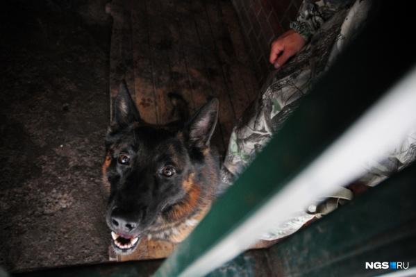 Салон самолёта досмотрели полицейские-кинологи с собаками