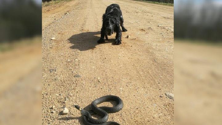 Ярославцев атакуют змеи: в каких районах города видели ползучих гадов