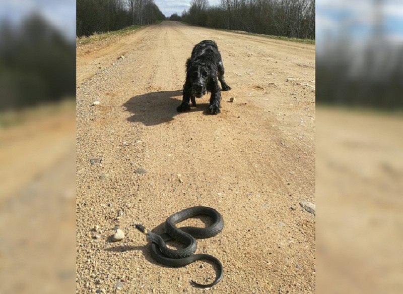 При встрече со змеёй лучше не шевелиться, тогда она уползёт сама