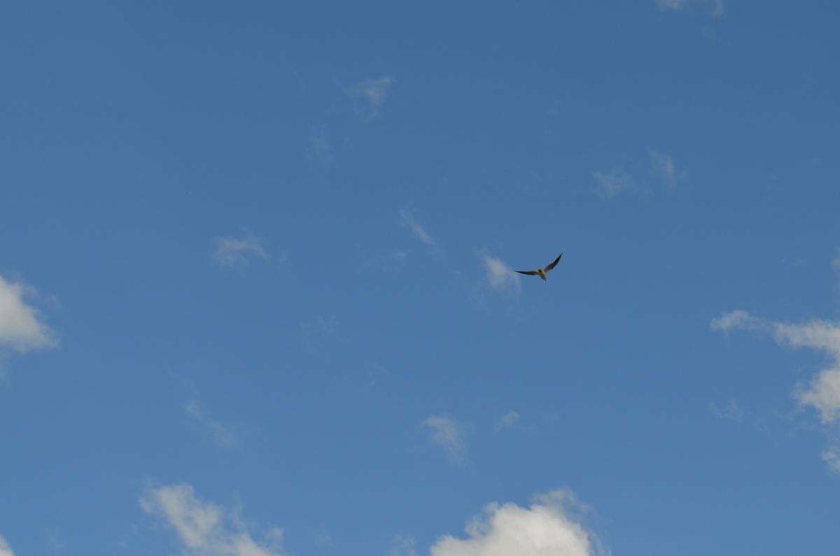 Квартал «Сказы Бажова на набережной Щербакова» соседствует с природой. Здесь чайка, пролетающая над домом, — это обычное дело