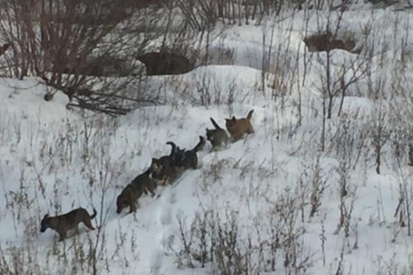 Власти Челябинска прояснили, когда в городе начнут отлавливать бездомных собак