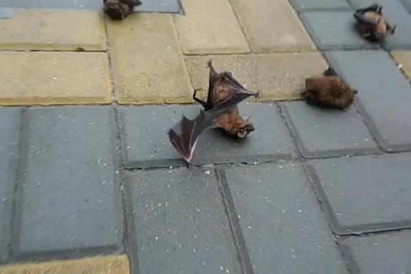 Заснувших мышей нашли на Красноармейской