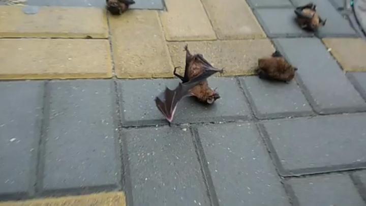 В центре города на головы ростовчанам посыпались летучие мыши