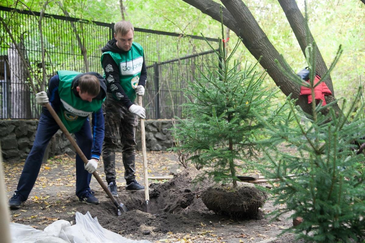 В новосибирском зоопарке высадили пихты, ели и яблони