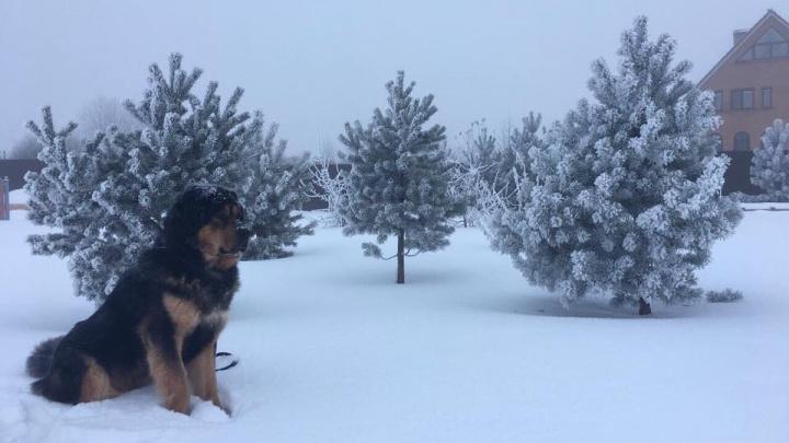 У депутата Ярославской областной думы сбежал любимый пёс: помогите найти