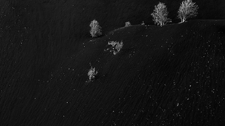 Уральский фотограф получил награду от National Geographic, сфотографировав березы на мертвой горе