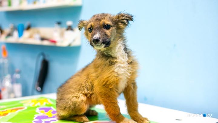С 1 января агрессивных собак обязали содержать в приютах. В Красноярске денег на это нет