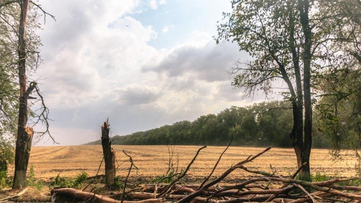 «Держитесь подальше от деревьев»: в Самарской области ожидают сильный ветер