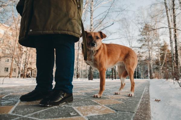 Рассказываем о непростой собачьей жизни Буги