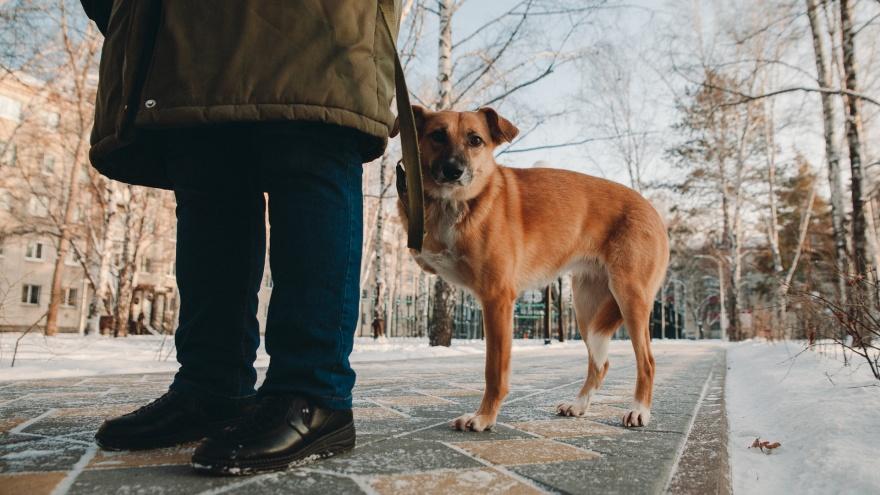 «Ее нашли на обочине после ДТП»: история счастливой трехлапой собаки из Тюмени с непростой судьбой