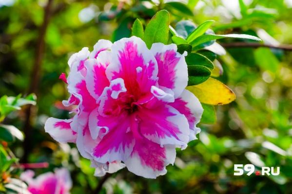 Для всех волонтеров проведут экскурсию и расскажут о самых редких растениях сада