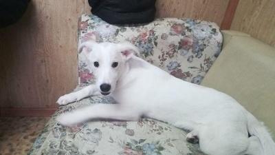 «Испугалась фейерверка в Закамске»: хозяева забрали щенка, которого приютили в ледовом городке