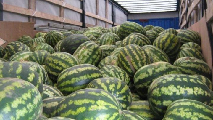 Сезон пошёл: на границе Челябинской области задержали 22 тонны арбузов