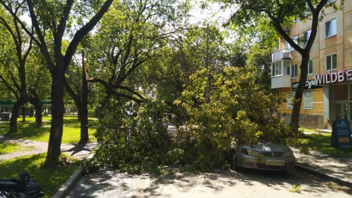 В Екатеринбурге ветер снес забор и повалил деревья на автомобили и детские площадки