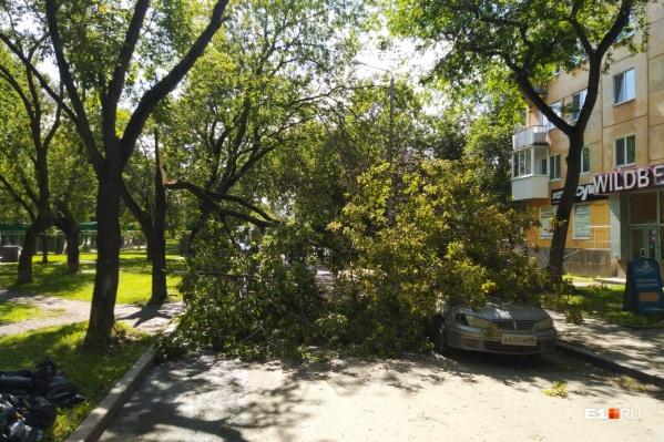 Старое дерево рухнуло на машину на улице Титова
